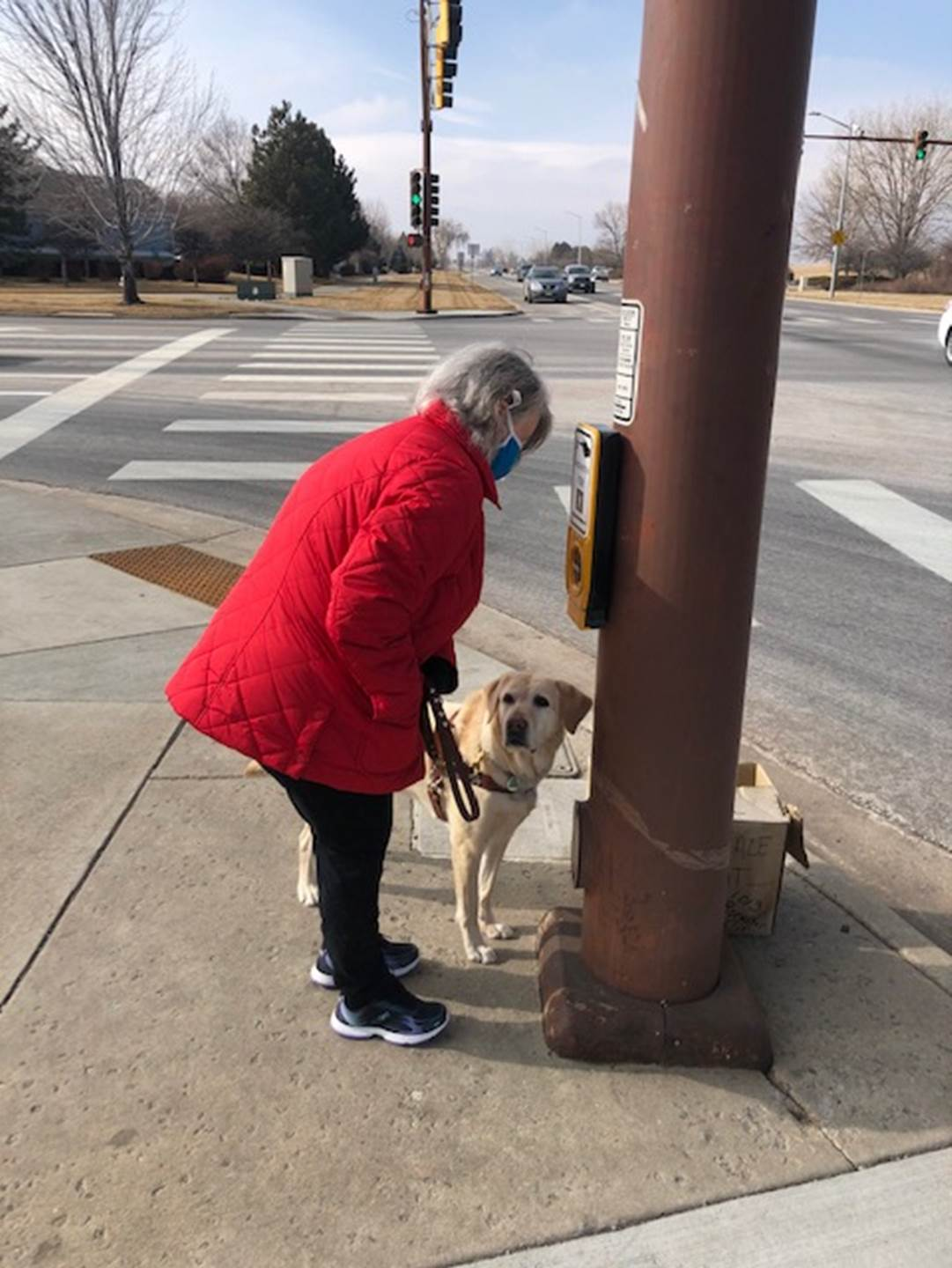 Sherry Gomes at the crosswalk with her Labrador, Shani. Sherry is a white woman with a red coat.